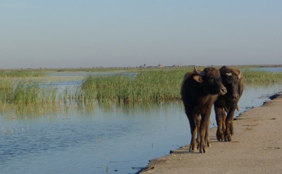 Southern Iraq- Marshes (11)